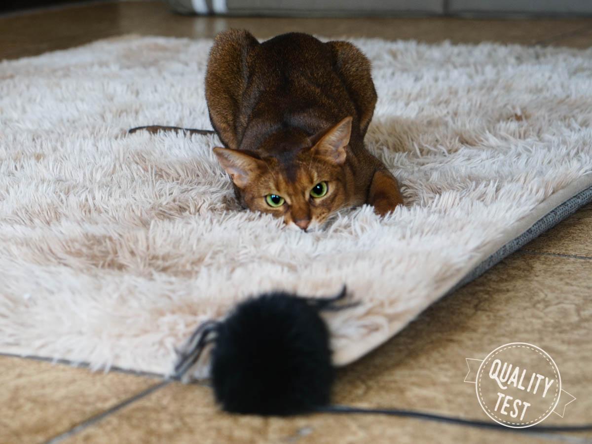 kotpoluje - 7 zabawek, które Twój kot (być może) pokocha!