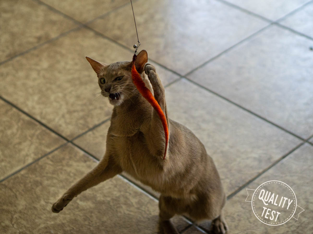 wedkadlakota - 7 zabawek, które Twój kot (być może) pokocha!