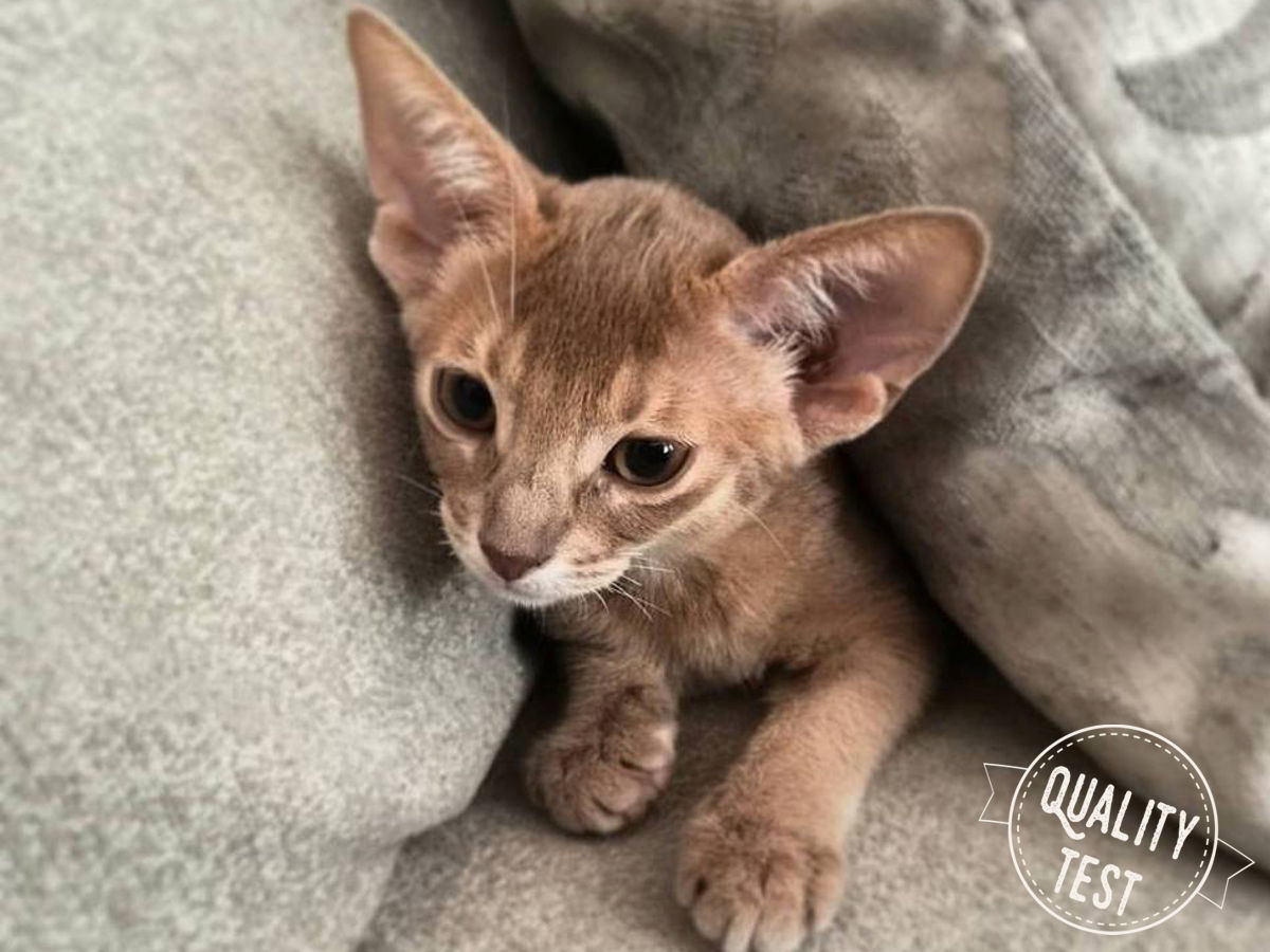 Mały Valuś - Kupujemy kota
