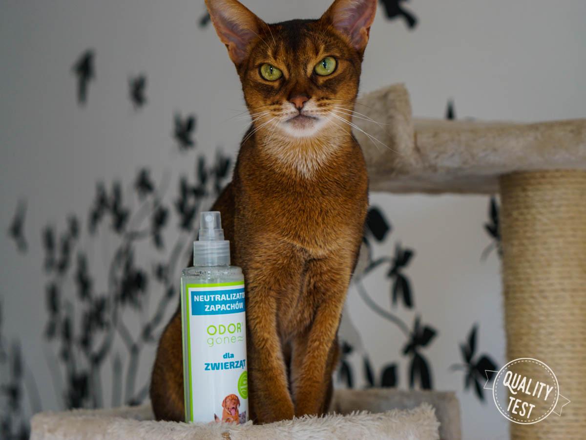 DSC06789 - OdorGone - neutralizator zapachów kota
