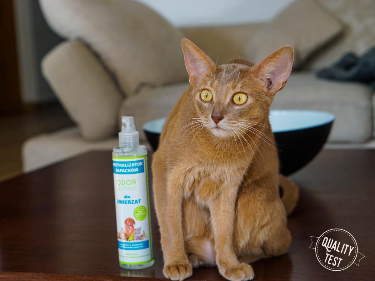 DSC06872 - OdorGone - neutralizator zapachów kota