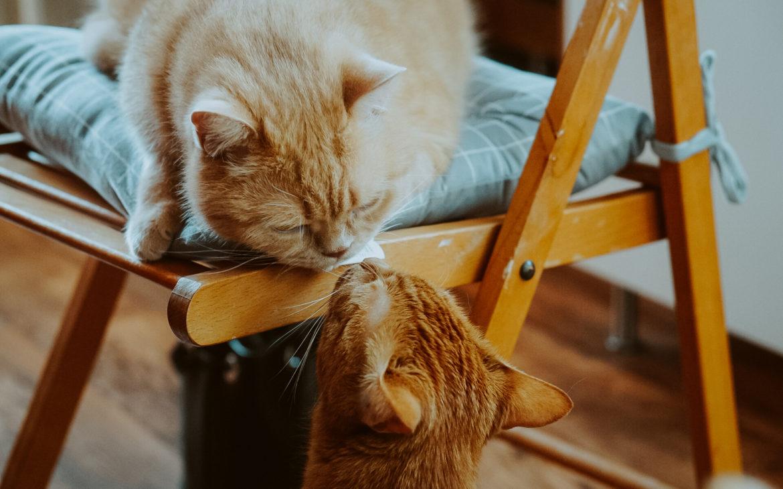 DSC07214 1170x730 - Jak dobrze żywić i traktować kota i psa? Rozmowa z Agnieszką Cholewiak-Góralczyk - dietetykiem i behawiorystą zwierząt