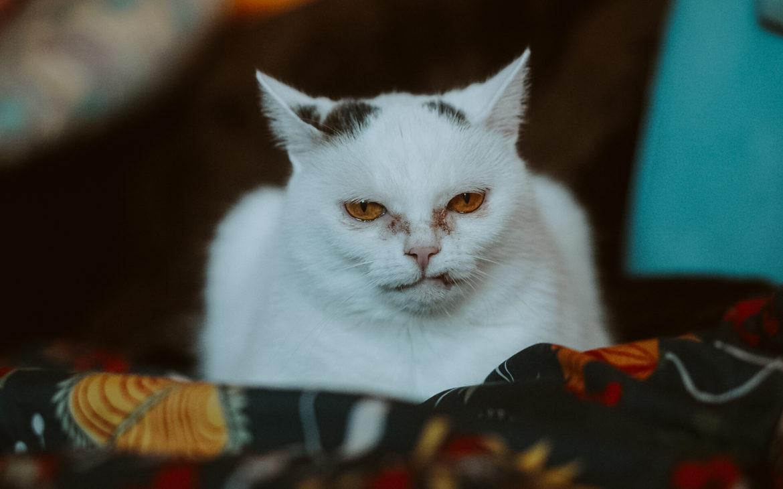 DSC07435 1170x730 - Jak dobrze żywić i traktować kota i psa? Rozmowa z Agnieszką Cholewiak-Góralczyk - dietetykiem i behawiorystą zwierząt