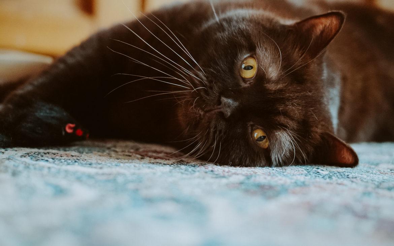 DSC07677 1170x730 - Jak dobrze żywić i traktować kota i psa? Rozmowa z Agnieszką Cholewiak-Góralczyk - dietetykiem i behawiorystą zwierząt