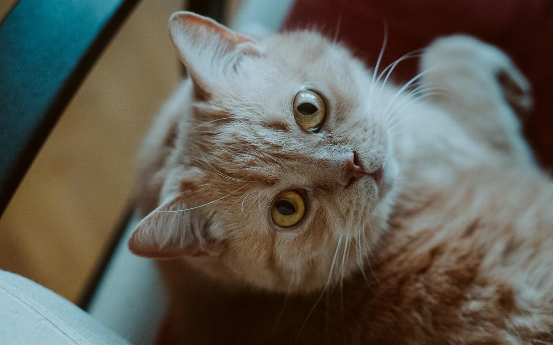 DSC07889 1 1170x730 - Jak dobrze żywić i traktować kota i psa? Rozmowa z Agnieszką Cholewiak-Góralczyk - dietetykiem i behawiorystą zwierząt