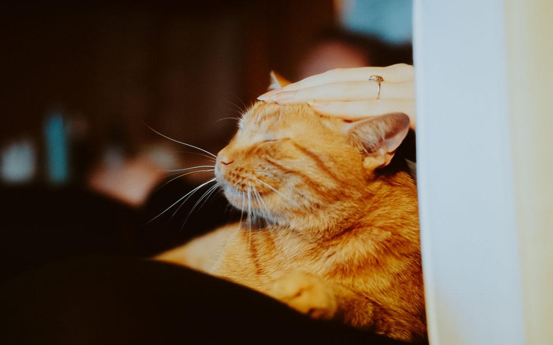 DSC07911 1170x730 - Jak dobrze żywić i traktować kota i psa? Rozmowa z Agnieszką Cholewiak-Góralczyk - dietetykiem i behawiorystą zwierząt