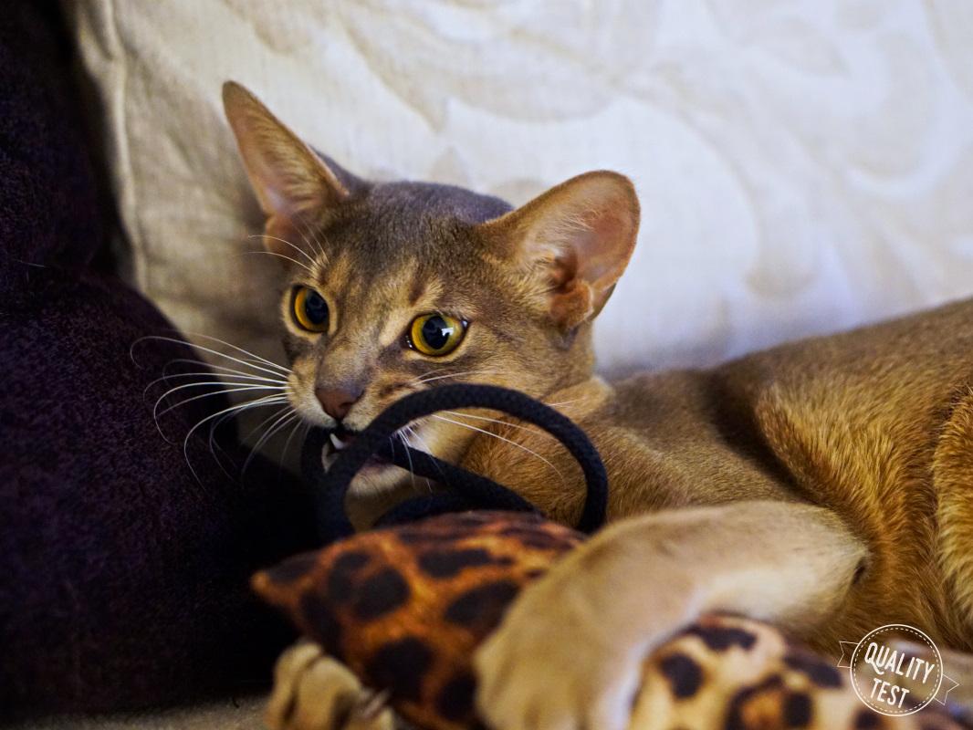 DSC09271 - THE MISS CAT - przytulne legowisko dla kota