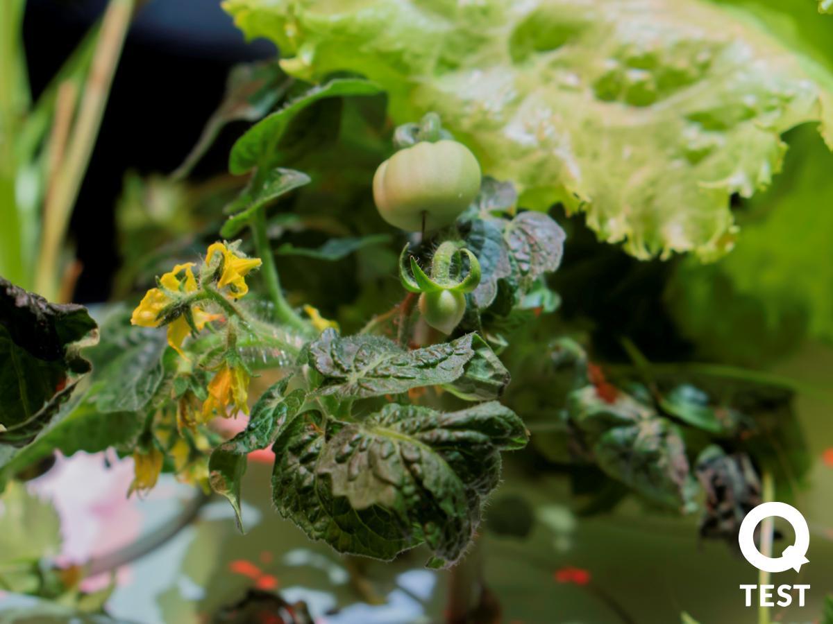 Smart Garden Click & Grow, domowy ogród, inteligentna doniczka