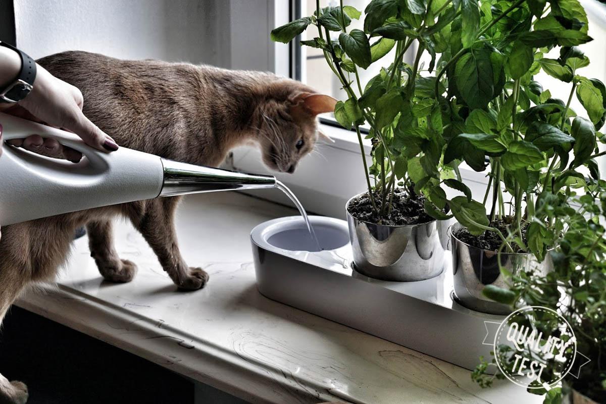 doniczki na ziola wmf 2 - Zioła w kuchni – 3 gadżety, które warto mieć