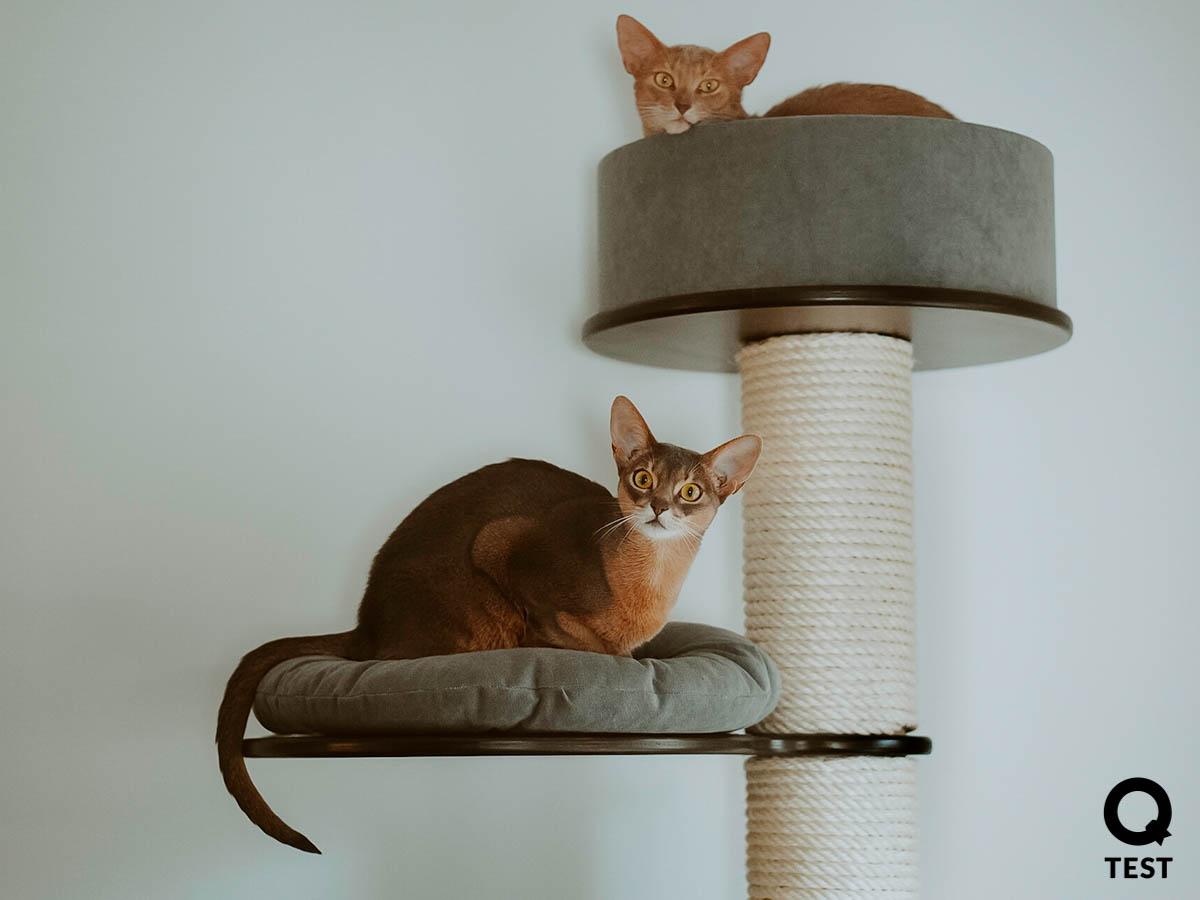 drapak dla kota 1 2 - Drapak dla kota - jak wybrać najlepszy?