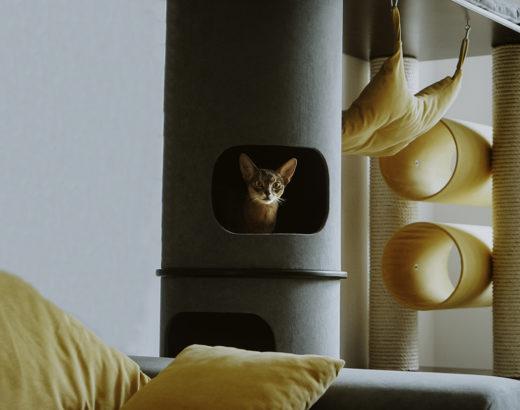 drapak dla kota 14 520x410 - Drapak dla kota - jak wybrać najlepszy?
