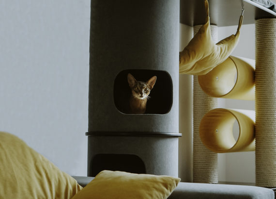 drapak dla kota 14 570x410 - Drapak dla kota - jak wybrać najlepszy?
