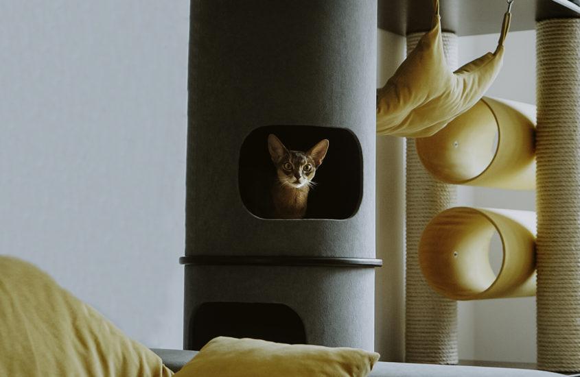 Drapak dla kota – jak wybrać najlepszy?