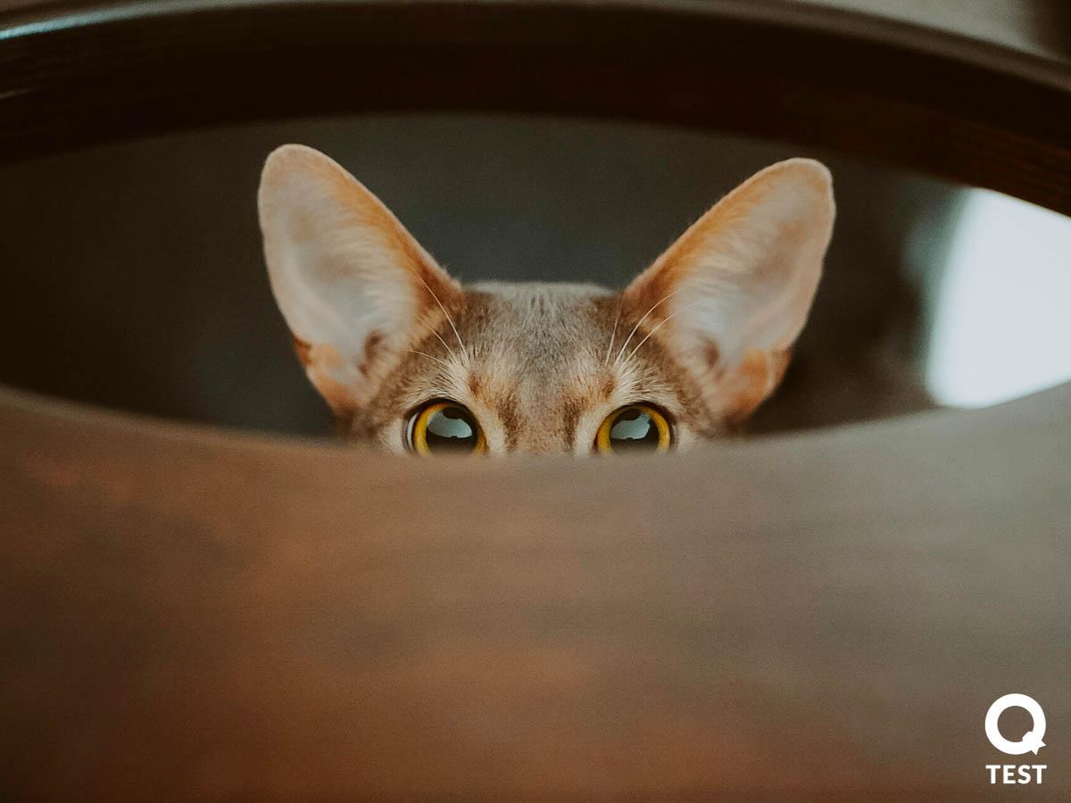 drapak dla kota 3 - Drapak dla kota - jak wybrać najlepszy?