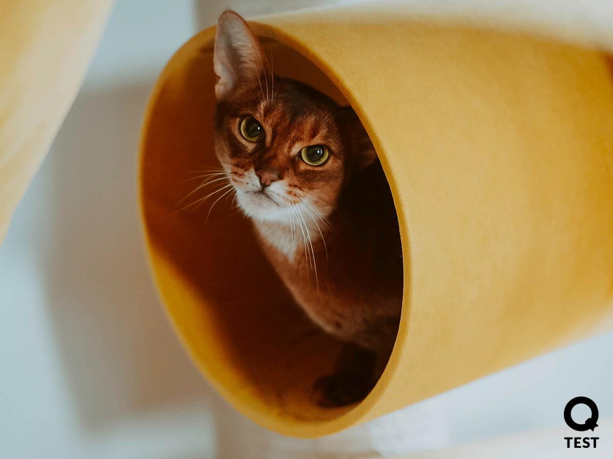 drapak dla kota 6 2 - Drapak dla kota - jak wybrać najlepszy?