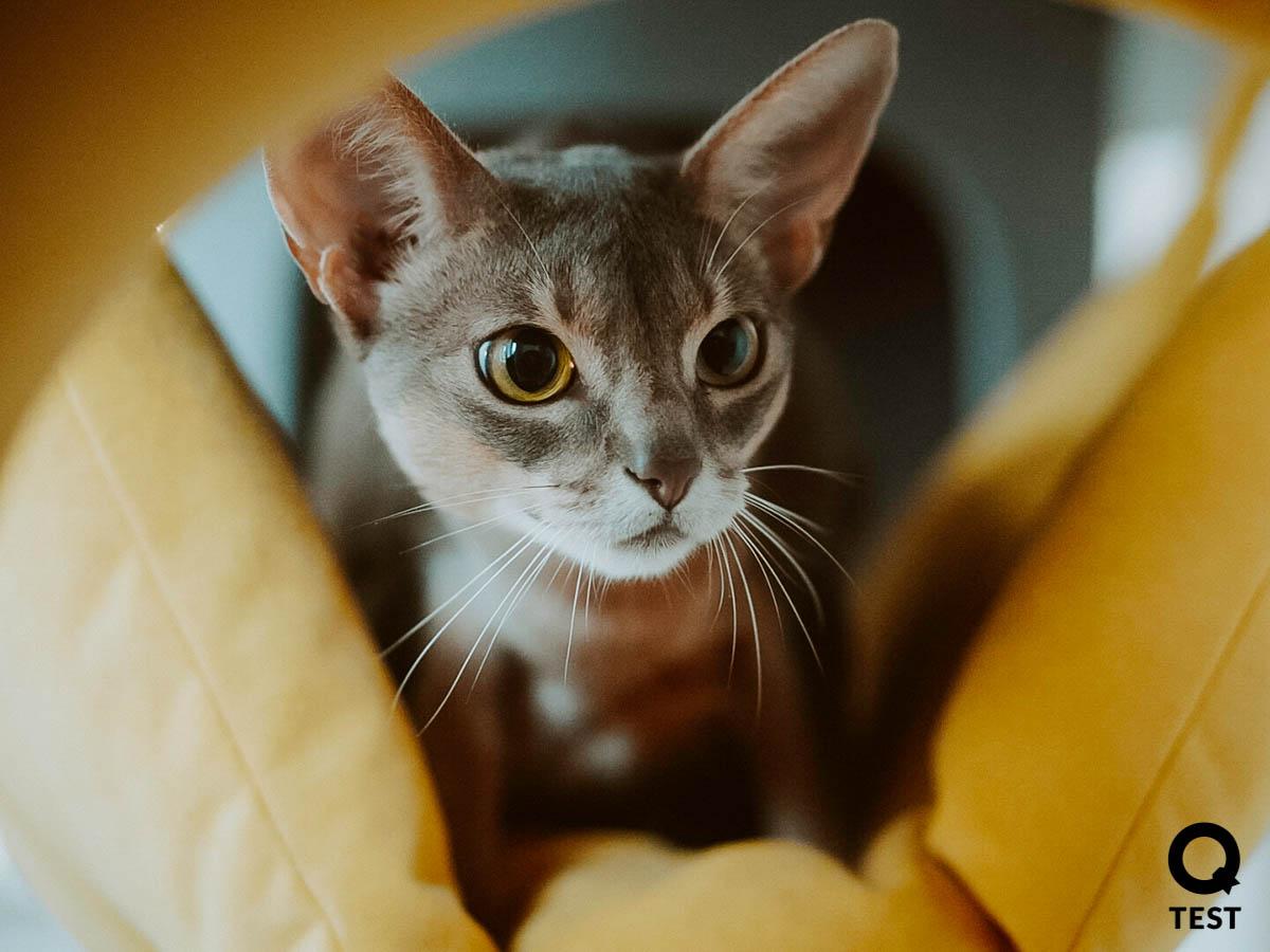 drapak dla kota 9 2 - Drapak dla kota - jak wybrać najlepszy?