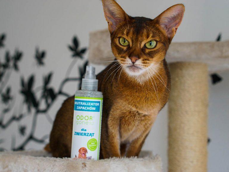 glowne 768x577 - OdorGone - neutralizator zapachów kota