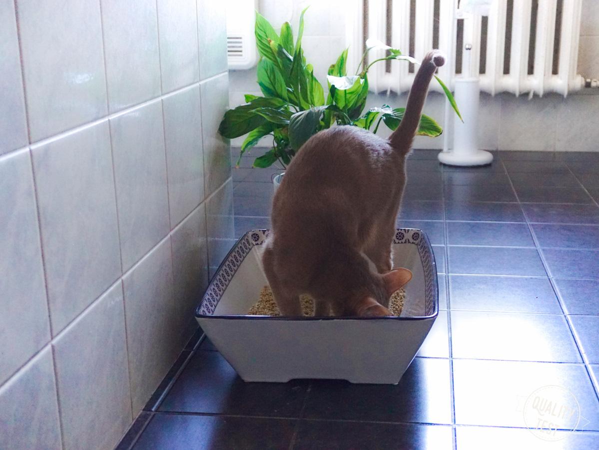 kuweta ceramiczna 50cats 15 - Kuweta ceramiczna 50Cats - nieoczywista oczywistość