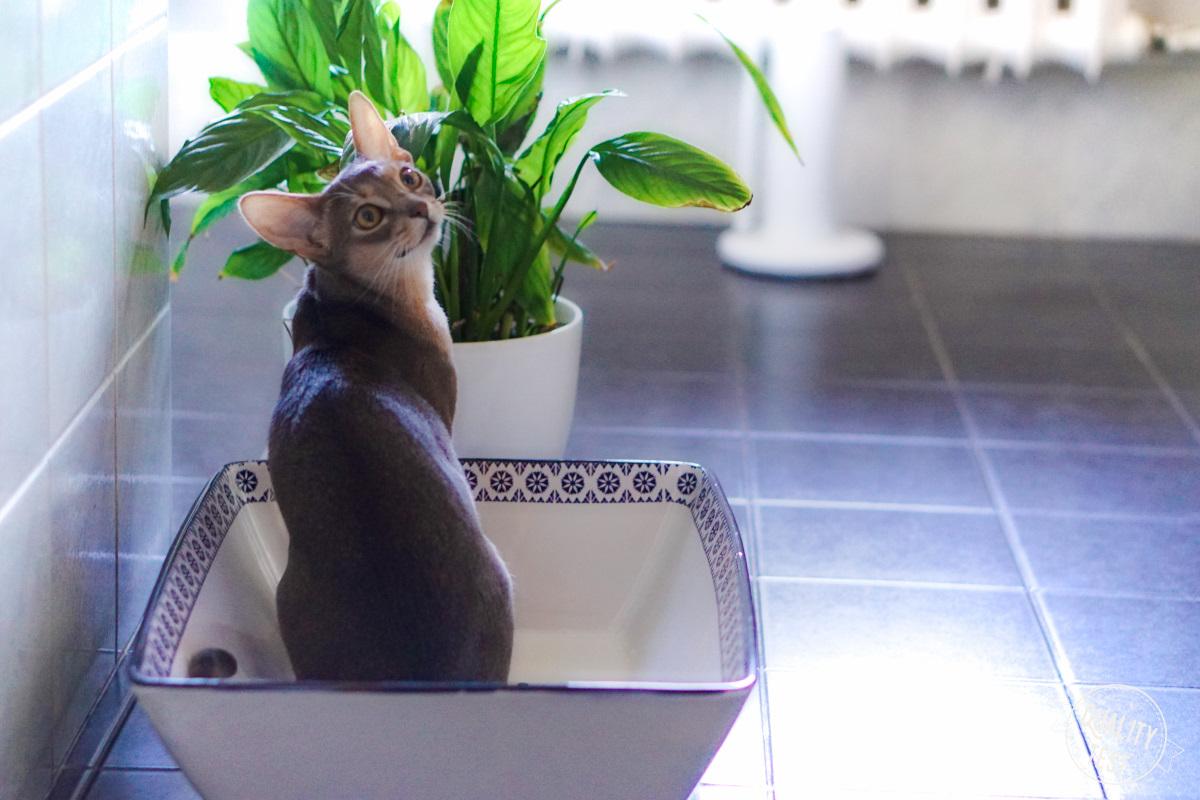 kuweta ceramiczna 50cats 3 - Kuweta ceramiczna 50Cats - nieoczywista oczywistość