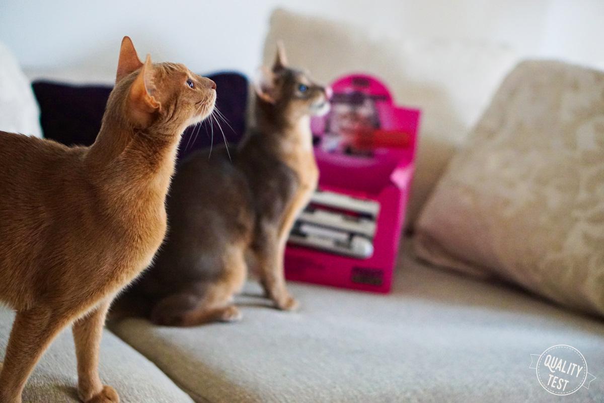 meatlove karma dla kota 15 - Pussy Deluxe od MEATLOVE - karma dla kota