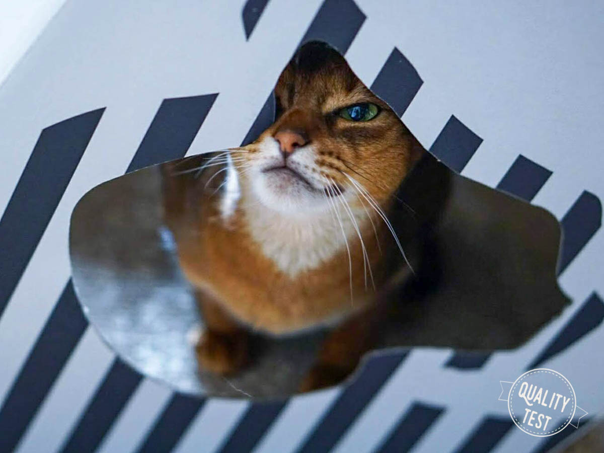 mykotty 2 2 - MyKotty - stylowe meble dla kotów