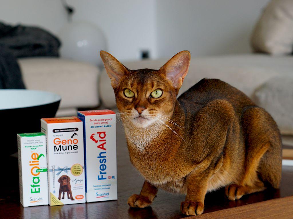 scanvet 1 - Suplementy dla kotów ScanVet - nasza recenzja