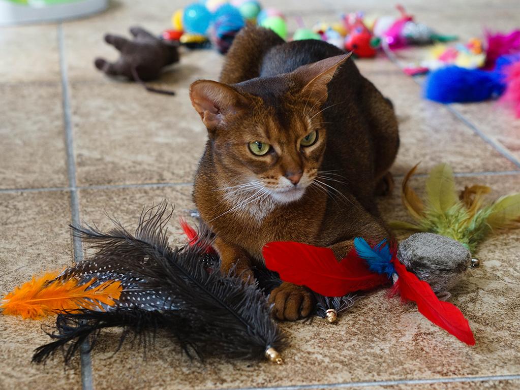 zabawkidlakota glowne - 7 zabawek, które Twój kot (być może) pokocha!